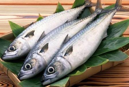 Manfaat Mengonsumsi Ikan Tongkol Untuk Kesehatan Tubuh